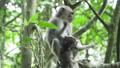 动物 猴子 猕猴 36885015