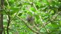 动物 猴子 猕猴 36885038