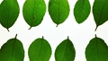 Stop motion view of green leaves 36965799
