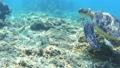 沖繩Tokashikijima的Takashi Ward的綠海龜海灘的水下攝影 37027002