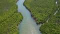 西表島的紅樹林 37192663