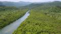 西表島的紅樹林 37192667