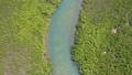 西表島的紅樹林 37192668