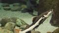 水族馆 鱼 水 37246193