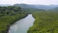 西表島的紅樹林 37249296