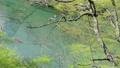 栃木県那須塩原市 板室 那珂川 カヌー(フィックス)5月 37252938