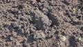 Man digging holes with spade 37279679