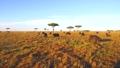 buffalo, animal, savanna 37352262