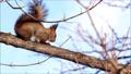 動物 冬 リスの動画 37353944