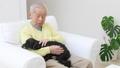 老人 犬 男性の動画 37405635