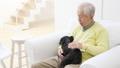 老人 犬 男性の動画 37405644