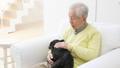 老人 犬 男性の動画 37405645