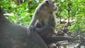 원숭이, 숲, 삼림 37635214