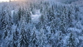 Flight over snowy mountain coniferous forest at 37774526