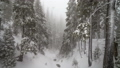 forest, landscape, snow 37812837