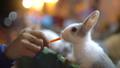うさぎ ウサギ 兎の動画 38000307