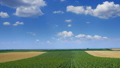 Rural landscape with fields stripes in Serbia 38012404