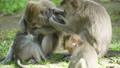 动物 猴子 猕猴 38027885