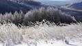 霧ケ峰高原の霧氷 38064978