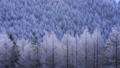 霧ケ峰高原のカラマツとダイヤモンドダスト 38107145