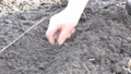 Women Planting Bow Early Spring Time 38141867