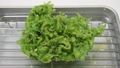 arthur, sea lettuce, tempra 38180495