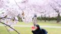 春 桜が咲く公園 38210019