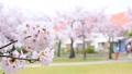 桜が咲く住宅街の公園 38268484