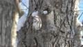 エゾモモンガ モモンガ 動物の動画 38295218