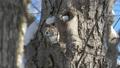 エゾモモンガ モモンガ 動物の動画 38295221