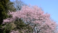 春のさった峠-6106135 38397268