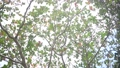 푸른, 녹색, 리조트 38403353