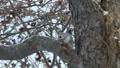 pokemonga的配置文件,留在樹枝上,吃樹堅果 38470457