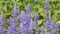 Bee keep pollen of lavender flower 38553843