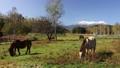 말, 목장, 기소 38635521