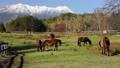 말, 목장, 기소 38635522