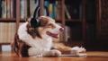 dog, animal, pet 38699494