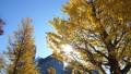 秋の丸ノ内、紅葉 38771115