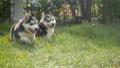 สัตว์,สัตว์ต่างๆ,หมา 38814041