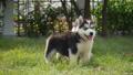 สัตว์,สัตว์ต่างๆ,หมา 38814043