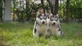 สัตว์,สัตว์ต่างๆ,หมา 38814045