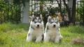 สัตว์,สัตว์ต่างๆ,หมา 38814046