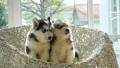 สัตว์,สัตว์ต่างๆ,เด็ก 38814095