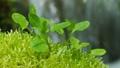 ふたば エコロジー 二葉の動画 38849402