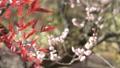 在姬路城堡旁邊的日本庭院Kokoen美麗的庭院與焦點運動的 38850024