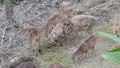 สัตว์,สัตว์ต่างๆ,กวาง 38894029