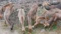 สัตว์,สัตว์ต่างๆ,กวาง 38894116
