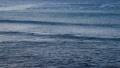 江の島の海と波 39019777