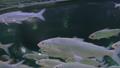 鱼 动物 水族馆 39029781
