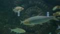 鱼 动物 水族馆 39029785